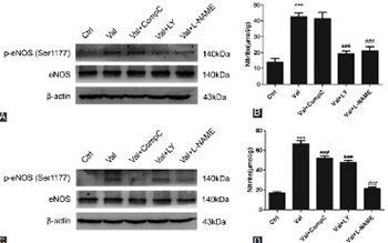 Nitric oxide synthesis-promoting effects of valsartan in human umbilical vein endothelial cells via the Akt/adenosine monophosphate-activated protein kinase/endothelial nitric oxide synthase pathway