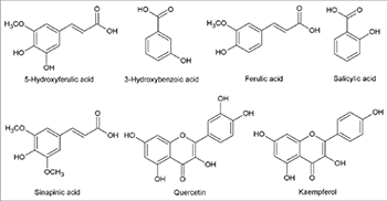 Evaluation of phenolic profile, enzyme inhibitory and antimicrobial activities of Nigella sativa L. seed extracts
