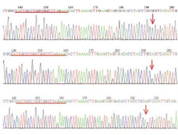 Assessment of relatedness between neurocan gene as bipolar disorder susceptibility locus and schizophrenia