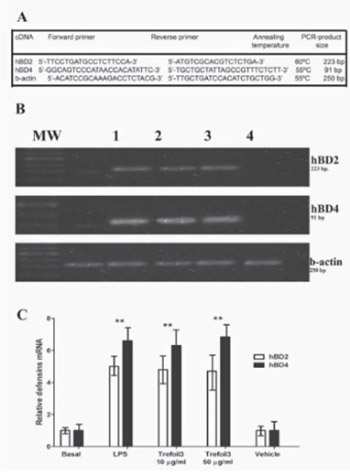 Trefoil factor 3 isolated from human breast milk downregulates cytokines (IL8 and IL6) and promotes human beta defensin (hBD2 and hBD4) expression in intestinal epithelial cells HT-29