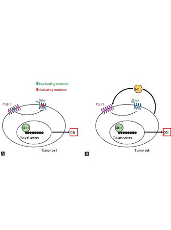 The role of the Hedgehog signaling pathway in cancer: A comprehensive review