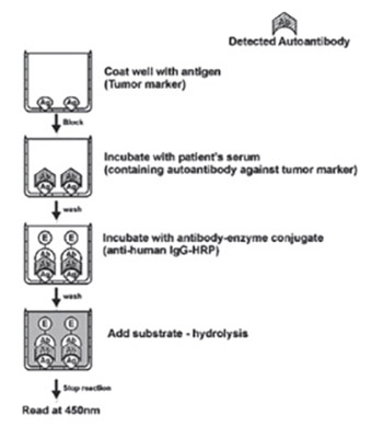 Optimization of Diagnostic Elisa - Based Tests for the Detection of Auto-Antibodies Against Tumor Antigens in Human Serum