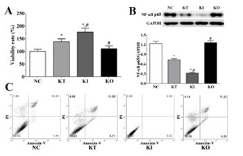 Ketamine exerts a protective role in a cell-based model of major depressive disorder via the inhibition of apoptosis and inflammation and activation of the Krebs cycle