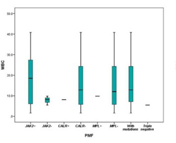 The effects of mutational profiles on phenotypic presentation of myeloproliferative neoplasm subtypes in Bosnia: 18 year follow-up