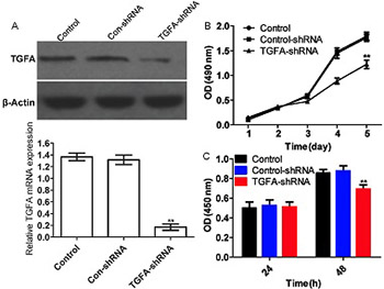 Cisplatin inhibits the proliferation of Saos-2 osteosarcoma cells via the miR-376c/TGFA pathway