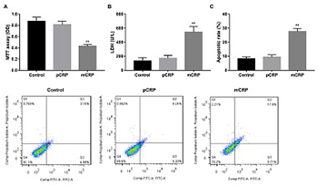 Monomeric C-reactive protein affects cell injury and apoptosis through activation of p38 mitogen-activated protein kinase in human coronary artery endothelial cells