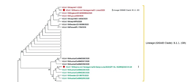 Phylogenetic pattern of SARS-CoV-2 from COVID-19 patients from Bosnia and Herzegovina
