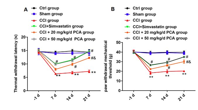 Protocatechuic acid as an inhibitor of the JNK/CXCL1/CXCR2 pathway relieves neuropathic pain in CCI rats
