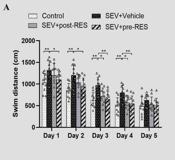 Resveratrol ameliorates neuronal apoptosis and cognitive impairment by activating the SIRT1/RhoA pathway in rats after anesthesia with sevoflurane
