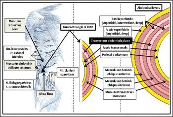 Efficacy of laparoscopic transversus abdominis plane block for elective laparoscopic cholecystectomy in elderly patients